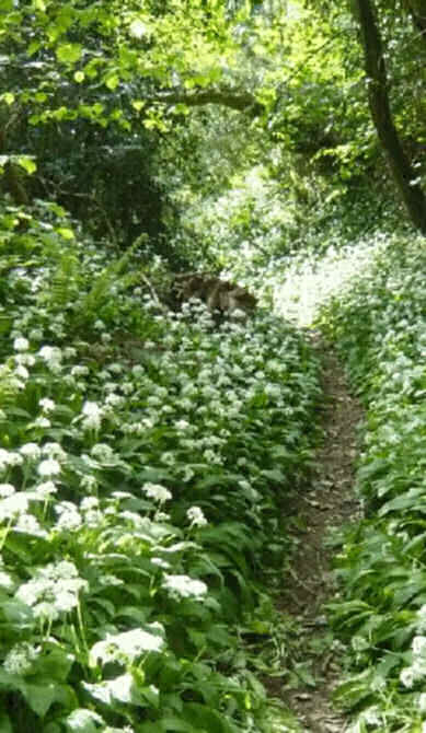 May in the dorset countryside, wild garlic and ferns on trail: Such is the Otherworld at Samhain source http://www.noelkingsley.com/blog/archives/2009/05/_we_read_with_i.html